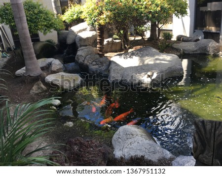Koi congregating in a well maintained pond. #1367951132