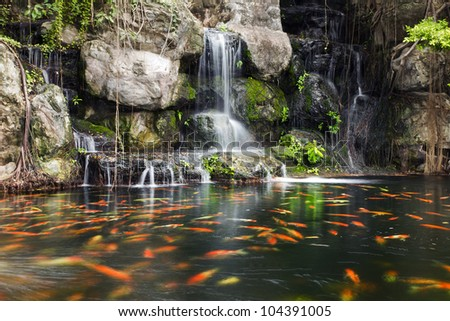 Koi fish in pond at the garden with a waterfall