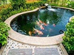 koi fish in pond in the garden