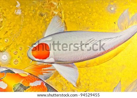Koi goldfish in orange and white color