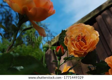 Kolorowe kwiaty. Zdjęcie zrobione o poranku Zdjęcia stock ©