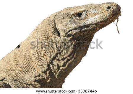 Komodo dragon isolated on white background
