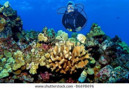 Kona Reef Scene