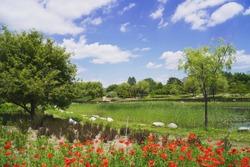 Korea national arboretum in sunny day
