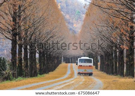 Korean public buses running roadside tree road in jinan, Jeollabuk-do Province, Korea #675086647