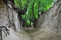 Korzeniowy Dol Gorge - the most popular gorge near Kazimierz Dolny, Poland. Unique gorge with 700 meter long passageway in a grove of woods and its roots