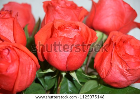 Krasnodar, RUSSIA - December 5, 2013: Red rose in a bouquet, Krasnodar Territory, Russia December 5, 2013  #1125075146