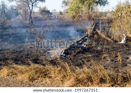 Kruger National Park: aftermath of controlled deliberate veld burning as part of veld management policy Stockfoto ©