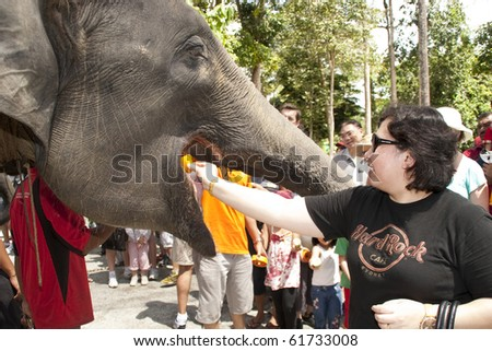 KUALA GANDAH, MALAYSIA - SEPTEMBER 25 : Visitor feeding the elephant during the Elephant Awareness Program at Kuala Gandah Elephant Orphanage Sanctuary September 25 2010 in Kuala Gandah, Malaysia.