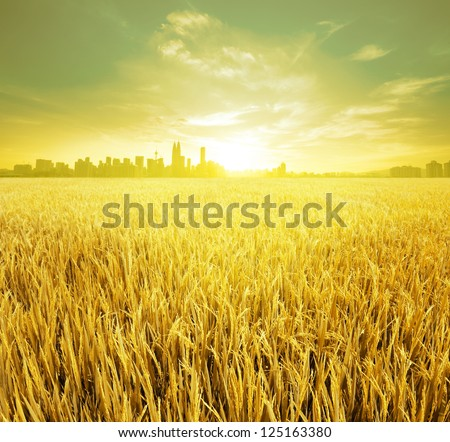 Kuala Lumpur is the capital city of Malaysia, landspace view over paddy field plantation in morning sunrise
