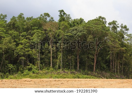 KUCHING MALAYSIA MAY 03 2014 Deforestation Photo of tropical rainforest in Borneo being destroyed to make way for oil palm plantation