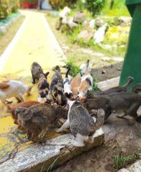 Kucing, disebut juga kucing domestik atau kucing rumah (nama ilmiah: Felis silvestris catus atau Felis catus), adalah sejenis mamalia karnivora dari keluarga felidae