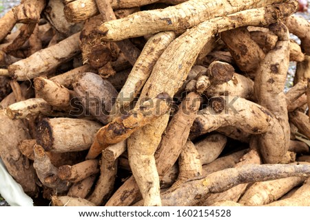 Kudzu roots are stacked at a market for sale, Korea. The starch of the root is edible. The root is squeezed and eaten.