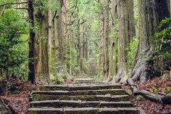 Kumano Kodo at Daimon-zaka, a sacred trail designated as a UNESCO World Heritage site in Nachi, Wakayama, Japan.
