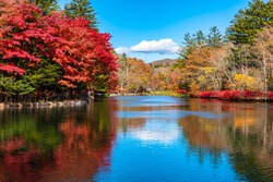 Kumobaike Pond autumn foliage scenery view, multicolor reflecting on surface in sunny day. Colorful trees with red, orange, yellow, golden colors around the park in Karuizawa, Nagano Prefecture, Japan