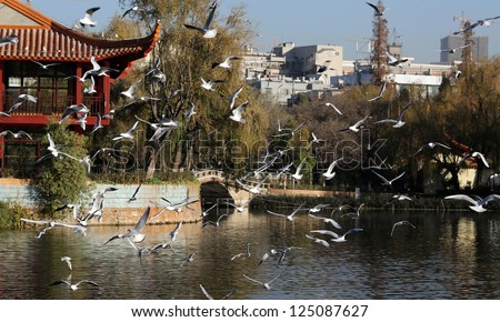 KUNMING - DECEMBER 21: Locals and tourists enjoy the Siberian seagulls spectacle at Cuihu Park on Dec 21, 2012 in Kunming, China. The 6th Kunming Seagull Cultural Festival starts Jan 01, 2013.