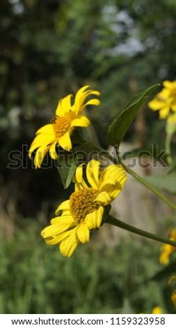 kwiat żółty ogród Zdjęcia stock ©