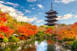Kyoto, Japan at Toji Pagoda in Autumn.