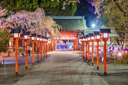 Kyoto, Japan entrance to Hirano Shrine at night during cherry blossom season.