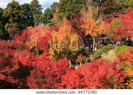 KYOTO - NOVEMBER 19: Crowds gather at the park of Tofukuji Temple to celebrate the autumn maple leave festival on November 19, 2005 in Kyoto, Japan