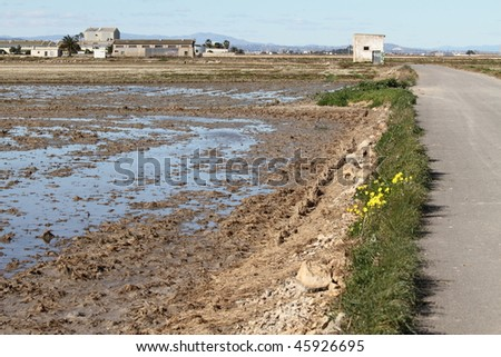 La Albufera nature reserve, El Palmar, Valencian community, Spain - stock photo