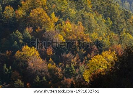 La Pardina del Señor forest in autumn, near to Fanlo (Ordesa and Monte Perdido National Park, Aragon, Spain, Pyrenees) Foto stock ©