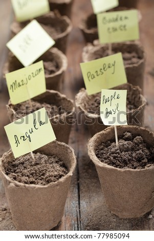 Labeled jiffy pots with planted seeds of vegetables #77985094
