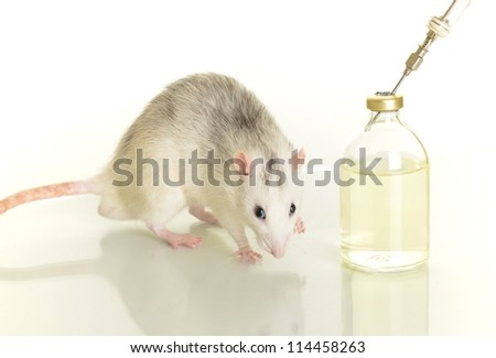 laboratory animal research rat