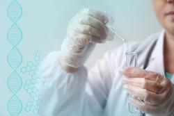 laboratory assistant in gloves puts a sample for DNA analysis on a cotton swab into a glass test tube, a scientific, police investigation and medical examination concept, close-up