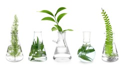 Laboratory flasks with plants on white background