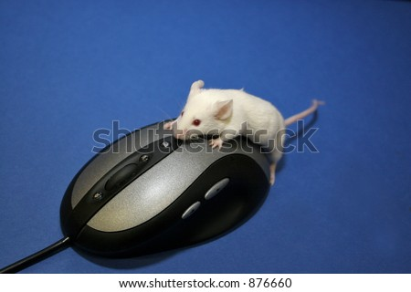 Laboratory mouse is trying to click computer mouse