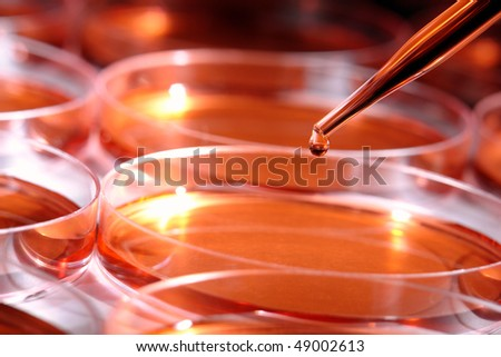Laboratory pipette with drop of red liquid over Petri dishes filled with media solution for an experiment in a science research lab