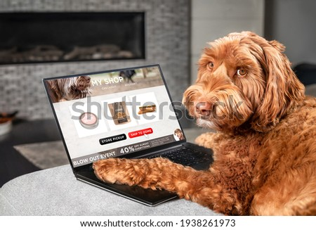 Labradoodle dog ordering online by internet for home delivery. Paws on laptop with a food shopping product selection. Concept for pets using technology, or animals imitating humans. Selective focus. Photo stock ©