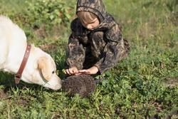 labrador dog and boy in garden or forest met hedgehog
