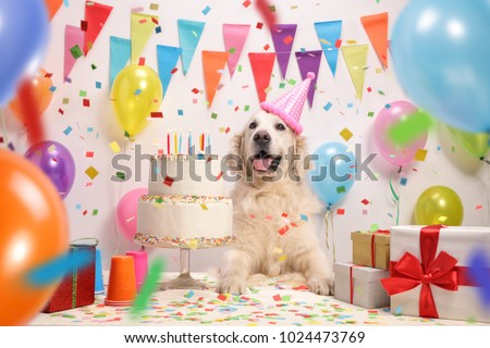 Labrador retriever dog with a birthday cake and a party hat