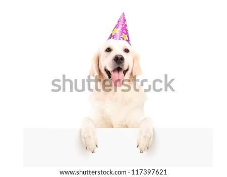 Labrador retriever with party hat posing on a blank panel isolated on white background
