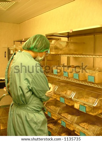 labworker observing the test subjects (white rats)