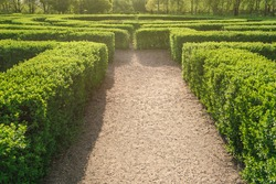 Labyrinth in a park at a sunny day in summer. A maze of bushes with green fresh foliage in a park