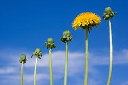 Ladder of success, originality