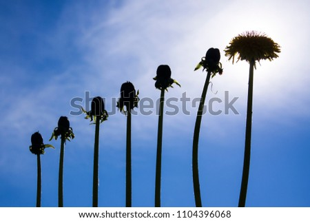 Ladder of success, originality  and development, different from other, dandelions against blue sky #1104396068