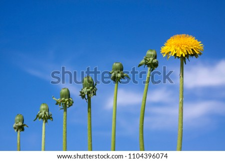 Ladder of success, originality  and development, different from other, dandelions against blue sky #1104396074