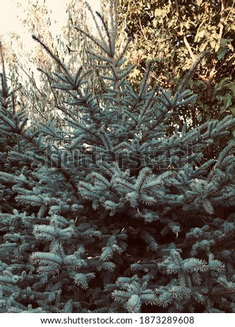 Ladin tree one light of Stok fotoğraf ©