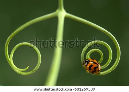 Lady Bug  #681269539