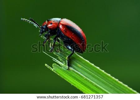 Lady Bug #681271357