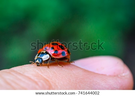 Lady bug on my fingers #741644002