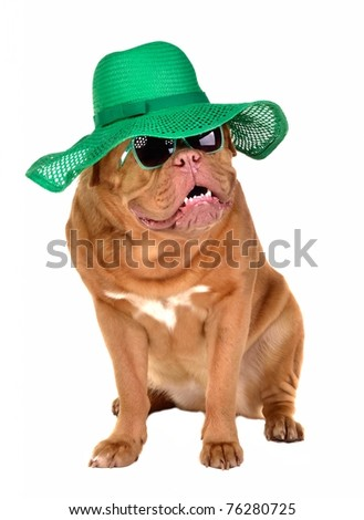 Lady dog wearing green straw hat and sun glasses, isolated - stock photo