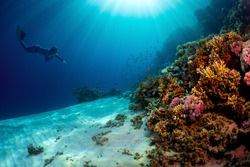 Lady free diver swimming underwater towards vivid coral reefs