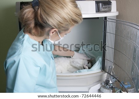 Lady vet with a cat
