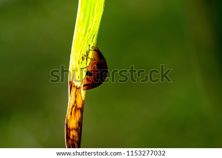 ladybird on green leaf #1153277032
