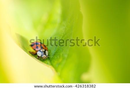 ladybird on leaf #426318382